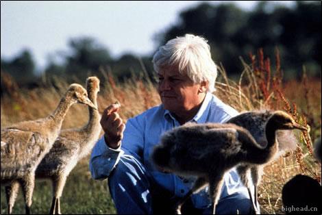 雅克贝汉(Jacques Perrin)与鸟儿们在一起,摄影:Patrick Chauvel