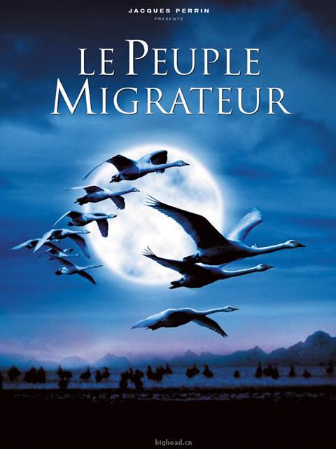 迁徙的鸟,鸟的迁徙——海报