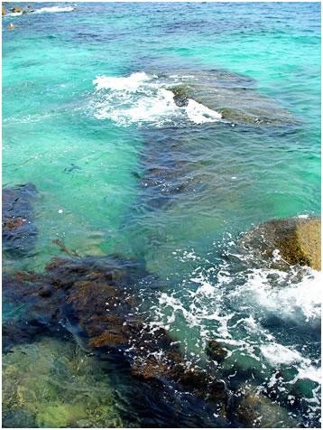 蜈支洲岛的珊瑚照片